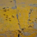 Ameisen können echt nerven und Krankheiten übertragen