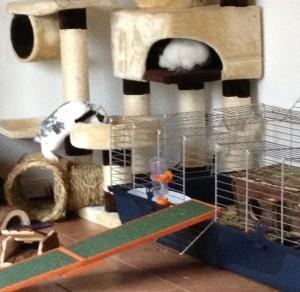 Kaninchen im Kratzbaum