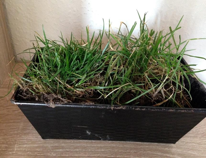 Rasen aus dem Garten
